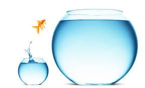 fish-risk