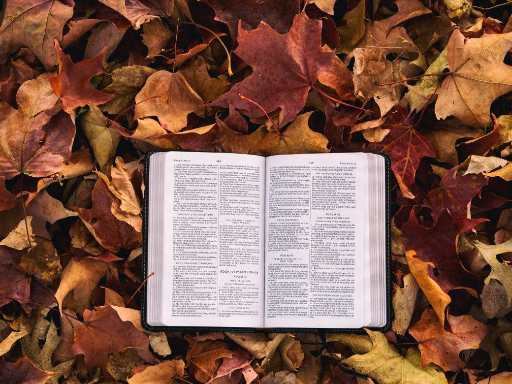 leaves and bible.jpg