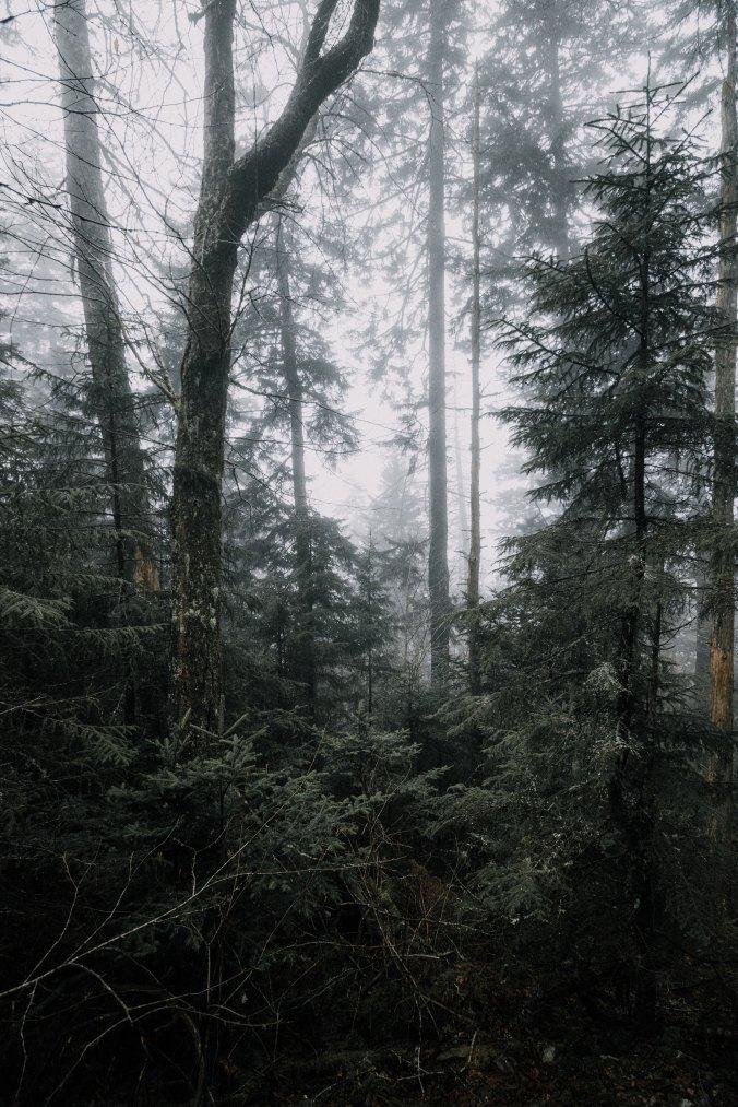 forest rain.jpg