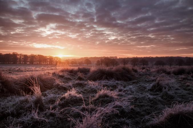 sunrise field