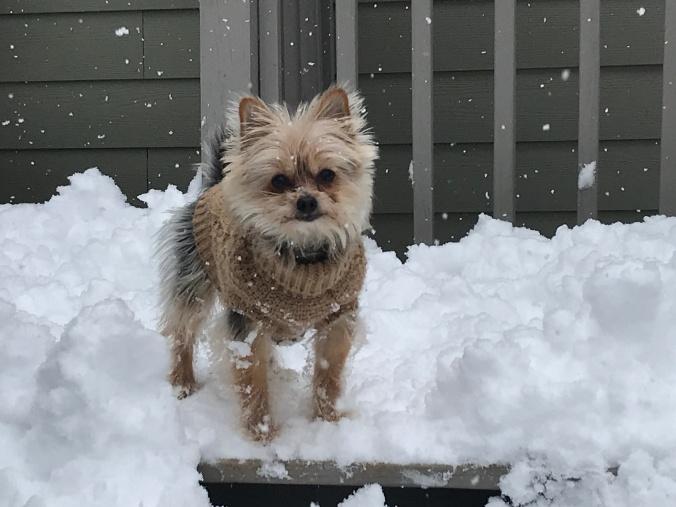 Peanut in the snow